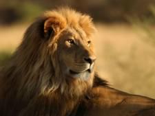 Deux personnes poursuivies pour avoir tué le lion Cecil