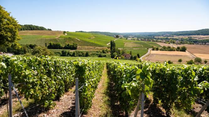 """Franse champagneboeren overleven dankzij onze bezoekjes: """"Zonder de Vlamingen zou dit jaar al verloren zijn"""""""