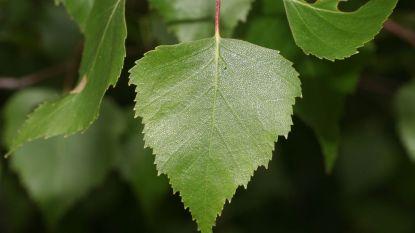Themawandeling over geneeskrachtige planten