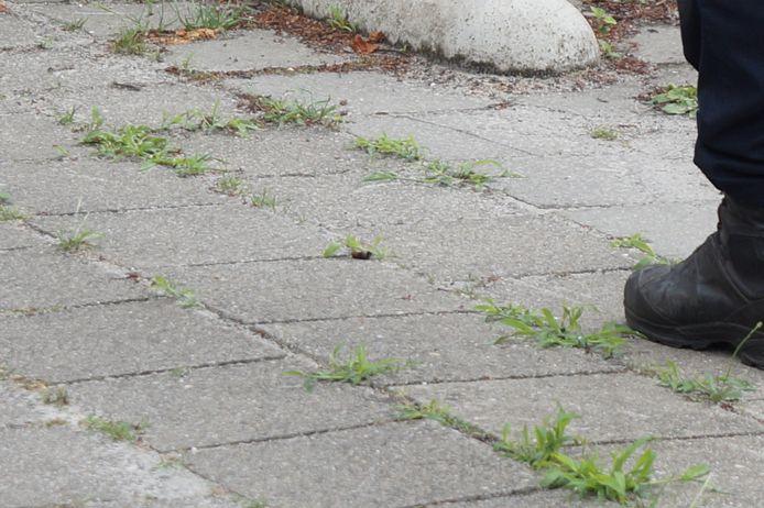 Een man is maandagmiddag rond 15.35 uur lichtgewond geraakt bij een schietincident ter hoogte van de Anreas Zijlmansstraat in Waalwijk. De politie vond een kogelhuls op de stoep.