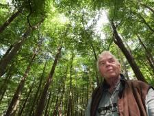 'Beuken in Broekhuizerlaan in Leersum nog honderd jaar mee? Wat een onzin'