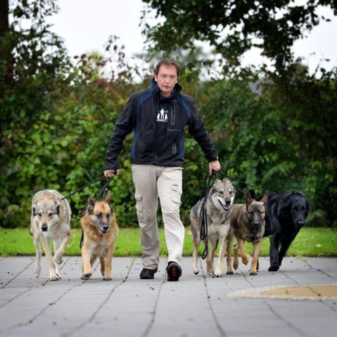 Pack Leader Bert van Straten leidt de roedel. foto's Robert van den Berge/het fotoburo