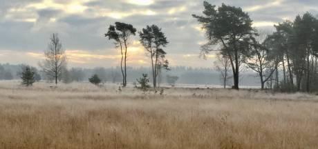 Lezersbrieven   Heide wordt door stikstof omgezet in 'grasvalt'   Laat mensen met schulden niet méér betalen dan rente