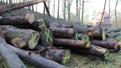 """Ongerustheid over bomenkap in Kluisbos is niet nodig volgens ANB: """"Manier om meer diversiteit in het bos te brengen"""""""