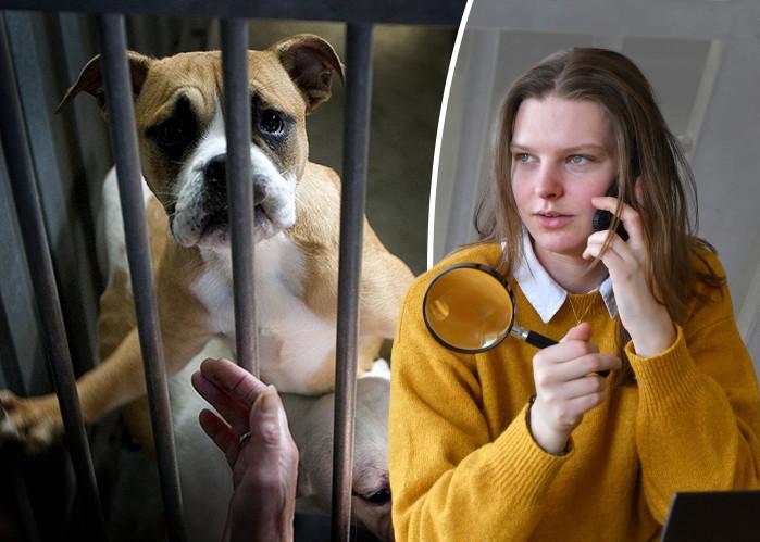 Zitten er echt zoveel honden in onze asiels? Dominique zoekt het uit.