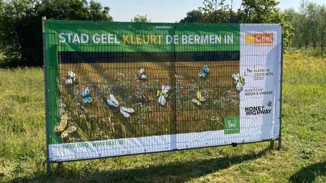 Stad krijgt lof voor 'honingsnelweg' langs ring bij deelname aan wedstrijd rond bijenvriendelijkste gemeente
