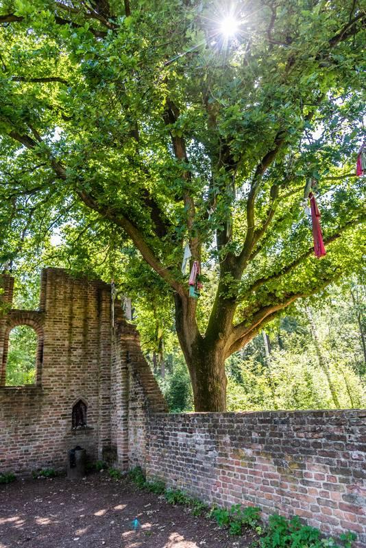 De troostboom van St. Walrick bij Alverna.