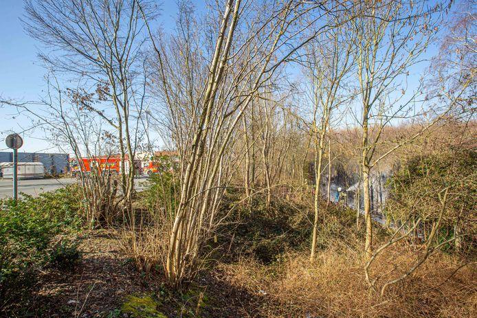 De brandweer blust een rij sparren tussen de Colruyt-parking en de achtertuin van een woning in de Molenstraat.