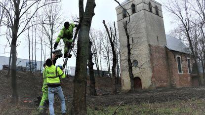 """Bouwheer Oosterweel plaatst 300 nestkastjes: """"Broedplaatsen voor vogels en vleermuizen"""""""