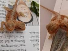 Cet étrange lézard utilise ses deux têtes pour manger