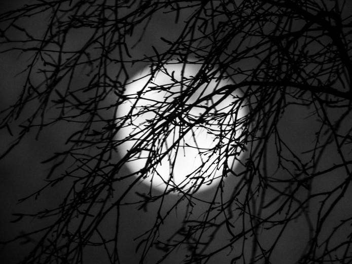 Ineke Eiten-kazemier maakte deze foto door de bomen heen.