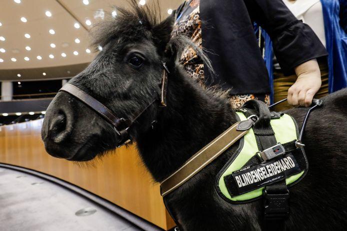 Dinky, het eerste blindengeleidepaardje van Europa.