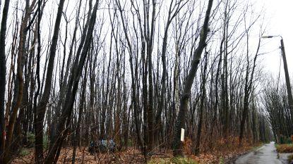 Na weigering verkaveling: Groen Rotselaar wil bestemming resterende natuur op Heikantberg wijzigen van woonparkgebied naar natuurgebied
