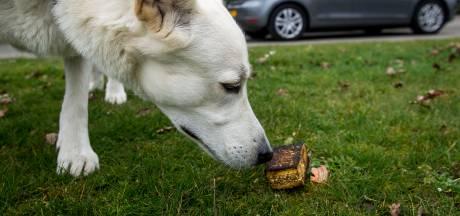 Ophef in Aalten over 'gebakken spons': broodje aap verhaal, of dodelijk hondengif?