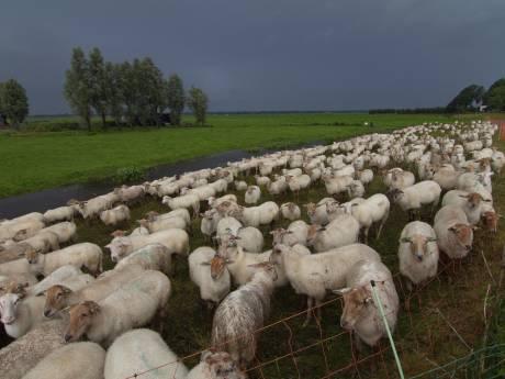 Waterschap: Al het vee moet van de dijken af