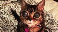 Wat is er aan de hand met de ogen van dit katje?