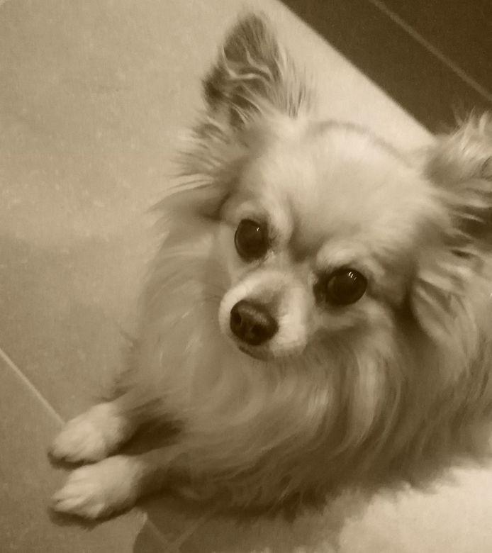 Hondje Gucci overleefde de aanval van de twee honden niet.