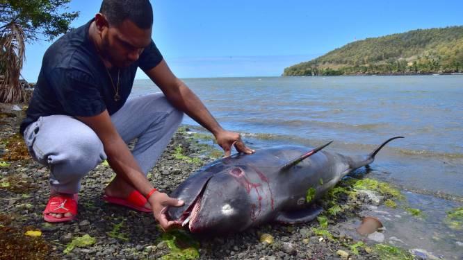 """Visser ziet hoe moederdolfijn opgeeft na dood van baby in olieramp Mauritius: """"We hoorden geschreeuw. Ik dacht dat het om een vrouw ging, maar het was de dolfijn"""""""