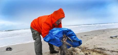Jaap speurt met haviksogen naar zieke zeehonden