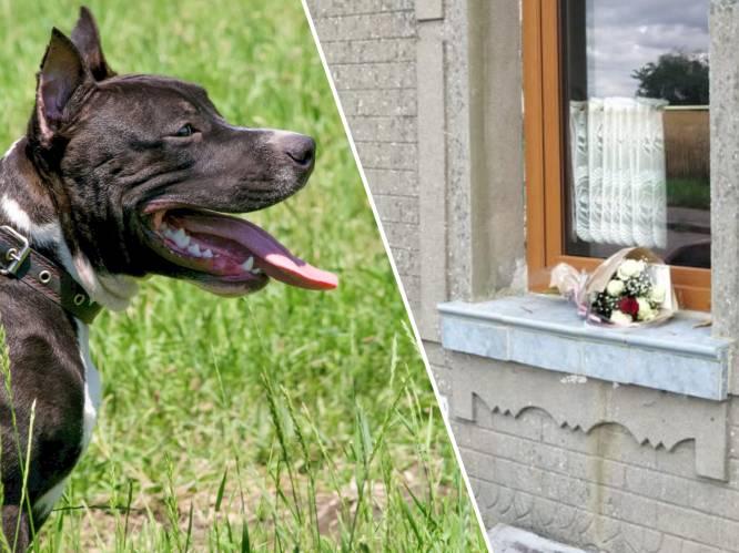 """American Stafford bijt 8-jarig meisje dood: """"Laat een hond nooit met een kind alleen"""""""
