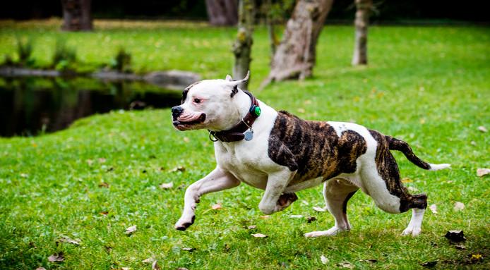 Genieten met de hond aan de Kralingse Plas is er straks misschien niet meer bij.