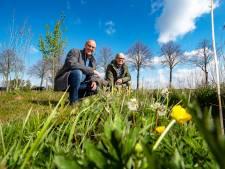 Minder maaien, meer bijen: 'Door bermen met rust te laten, helpen we de natuur'