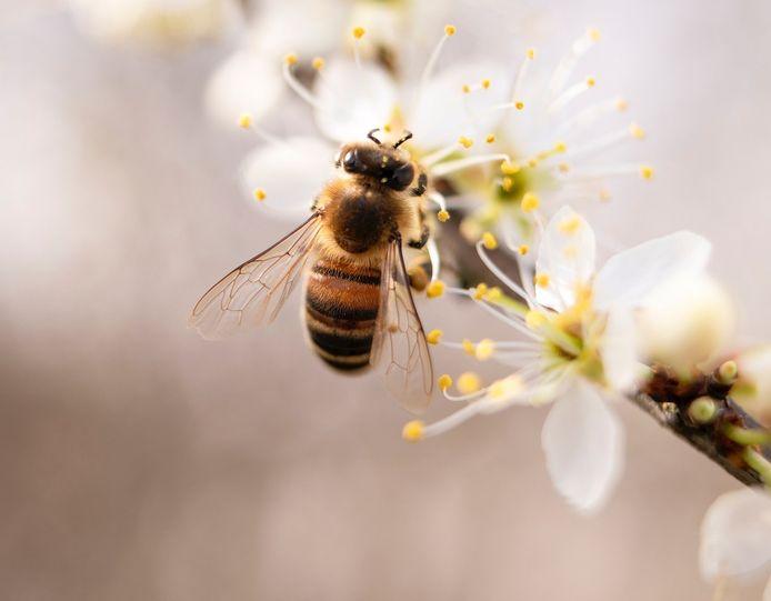Bijenvolken krijgen een plek bij de veldschuur.