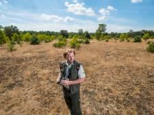 Het wild op de Veluwe zucht onder de droogte: 'Hier zijn geen natuurlijke drinkplaatsen'