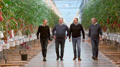 "Tomatenbedrijf bouwt 18 hectare serres in Rijkevorsel: ""Dankzij led-licht even goede tomaten in winter als in zomer"""