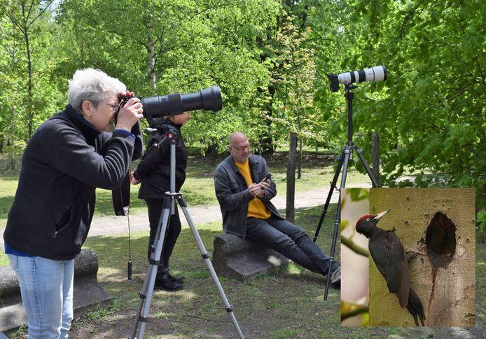 Een zwarte specht lokt dezer dagen heel wat (amateur) natuurfotografen naar het Kloosterbos.