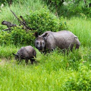 Op zoek naar tijgers, dolfijnen en neushoorns in Nepal