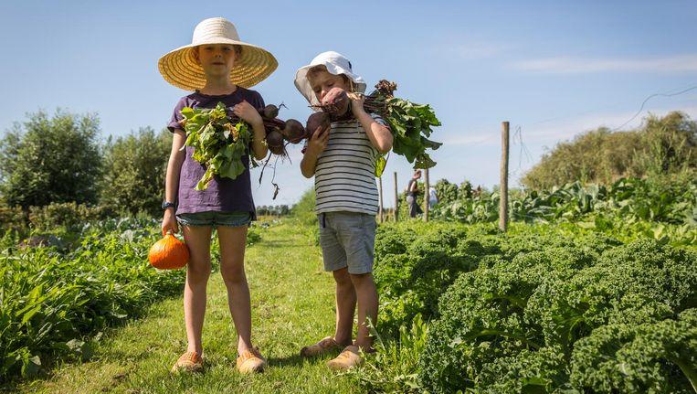 Gisteren was mogelijk de laatste jaarlijkse aardappelrooidag op De Boterbloem. Beeld Dingena Mol