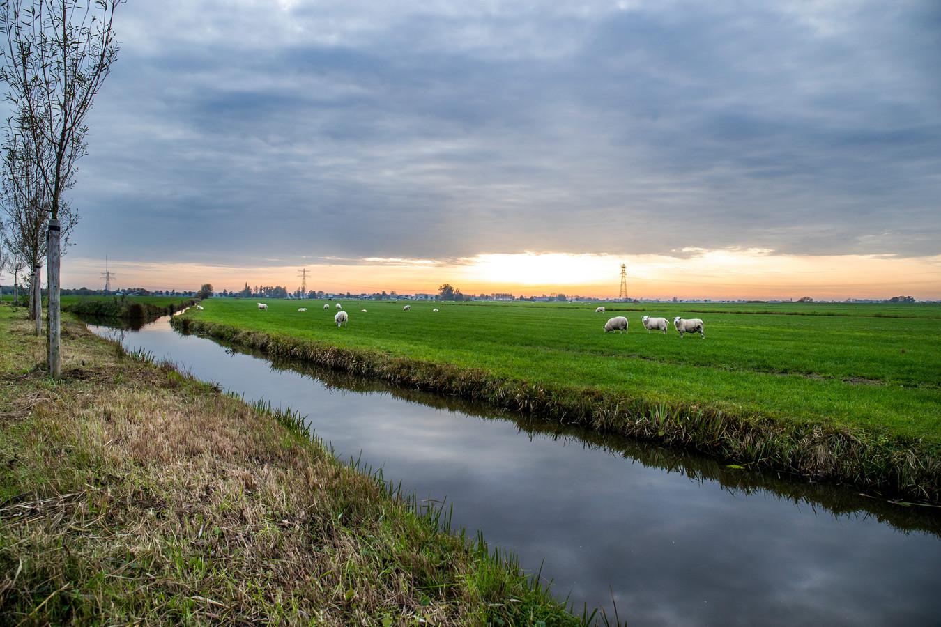 De Randstad heeft vele gezichten, zoals polder Rijnenburg, onder de rook van Utrecht.