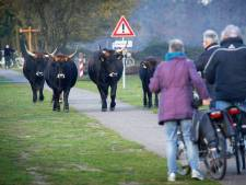 Maashorstbestuur blijft pal achter wisent en tauros staan