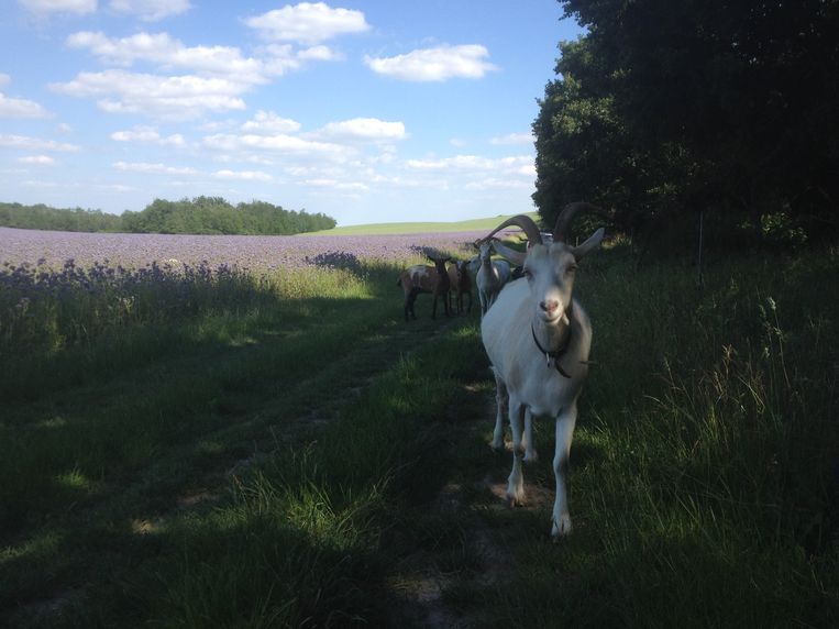 Het Hongaarse platteland. Beeld Jacob Eijkelboom