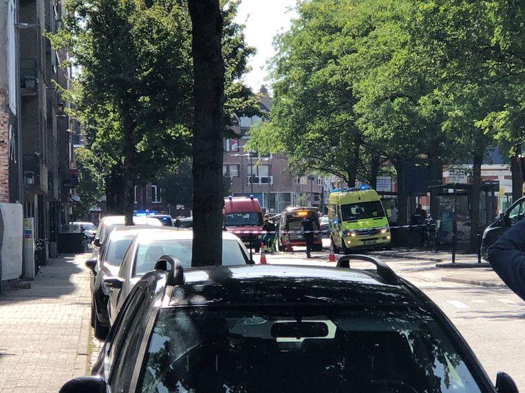De man klom in een boom aan de Stationsstraat.