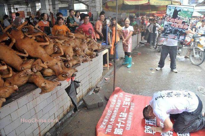 Dierenrechtenorganisaties protesteren tegen het jaarlijkse festival.