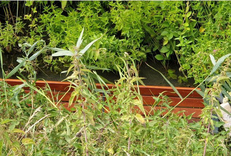 Een zitbank langs het Denderpad werd losgwrikt en in de achterliggende beek gegooid.