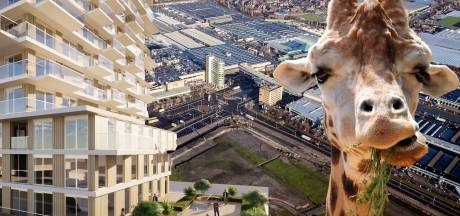 Dierentuin, kerncentrale of een boerenmarkt in Naaldwijk? Dit moet er volgens jullie met het veilingterrein gebeuren