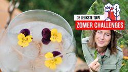 Van komkommerkruid tot ananaskers: Laurence Machiels pimpt je partydrinks met moois en lekkers uit de tuin
