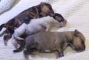 De drie gedumpte puppy's vlak na de vondst. Olimar (boven) overleefde het niet.