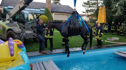 Duitse brandweer redt paard uit zwembad