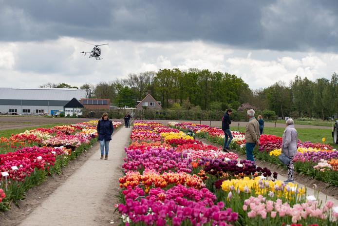 Het Tulpenfestival in Creil.