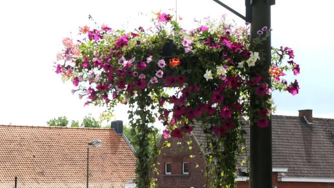 Bloemenmanden en bloemzuilen doen straatbeeld Kapellen opfleuren