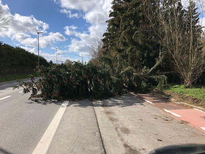 DENDERMONDE - Op de Mechelsesteenweg kwam ook een boom terecht op de weg.