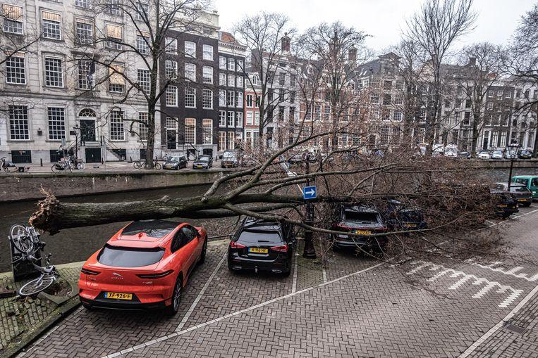 Een grote boom is omgevallen op een aantal auto's  op de Herengracht, ter hoogte van de Raadhuisstraat. Beeld Joris van Gennip