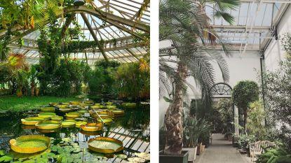Geurende rozen, klaterende watervallen en zoemende bijen: de 8 mooiste kruid- en plantentuinen in Vlaanderen