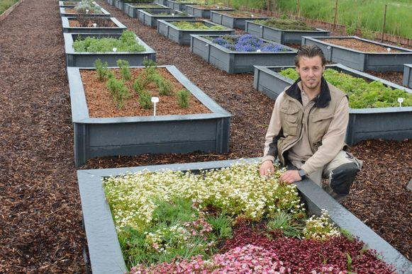 Sylvester Schatteman in de moestuin van het Hofke van Bazel waar hij een grote diversiteit aan groenten en kruiden kweekt.