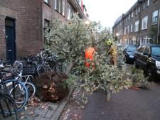 Vrachtwagen blijft achter tak hangen en trekt boom uit de grond in Delft