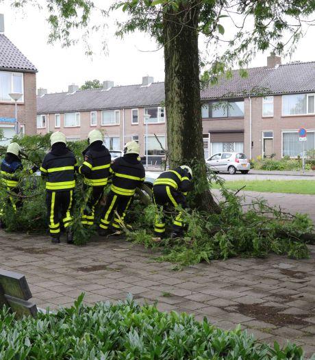 Afgebroken tak valt op geparkeerde auto's in Waalwijk
